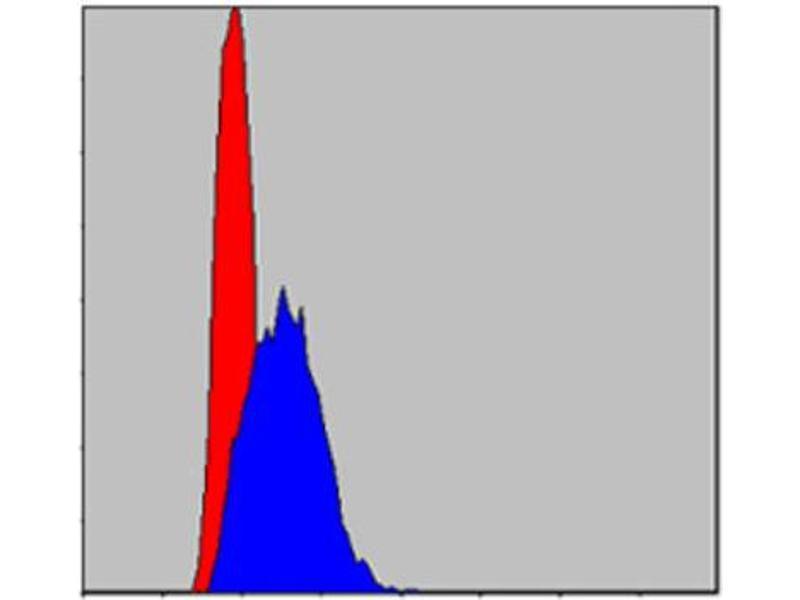 Flow Cytometry (FACS) image for anti-Jun Proto-Oncogene (JUN) antibody (ABIN1846409)