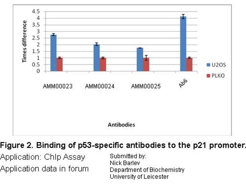 Image no. 2 for anti-p53 antibody (Tumor Protein P53) (ABIN970009)
