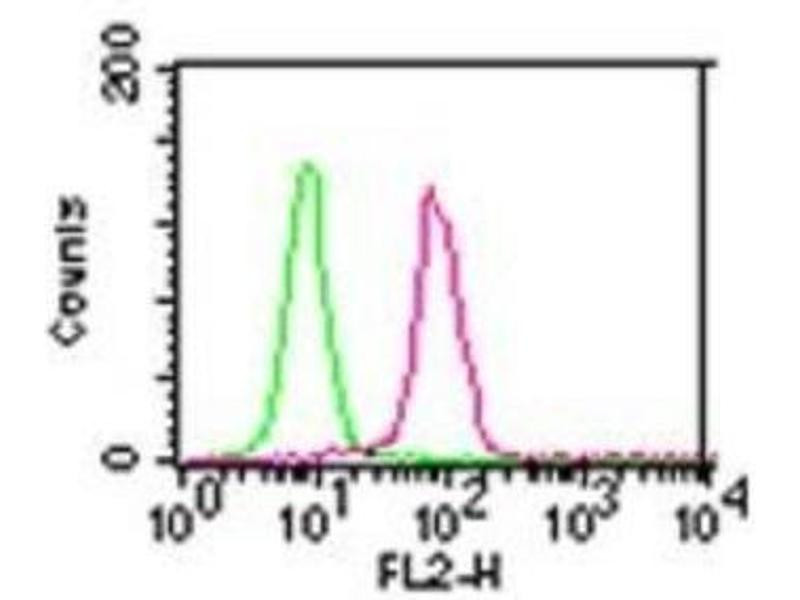 Flow Cytometry (FACS) image for anti-CHUK antibody (conserved Helix-Loop-Helix Ubiquitous Kinase) (ABIN252647)