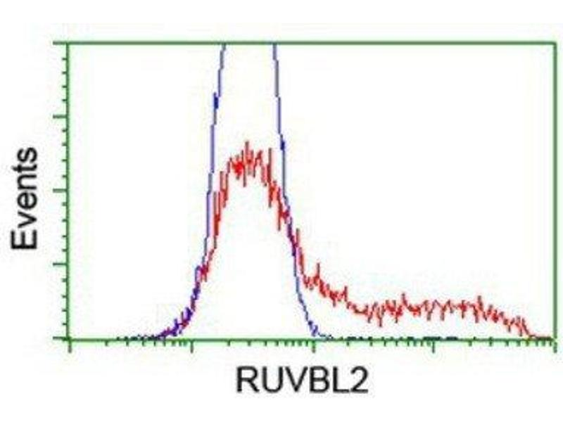 Flow Cytometry (FACS) image for anti-RuvB-Like 2 (E. Coli) (RUVBL2) antibody (ABIN4351487)