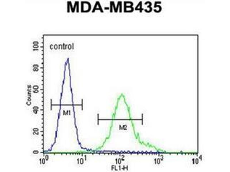 Flow Cytometry (FACS) image for anti-Glutamate Receptor, Ionotropic, N-Methyl D-Aspartate 2a (GRIN2A) (AA 1298-1326), (C-Term) antibody (ABIN953719)