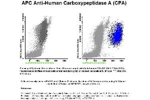 Image no. 1 for anti-Carboxypeptidase A1 (Pancreatic) (CPA1) antibody (APC) (ABIN1112254)