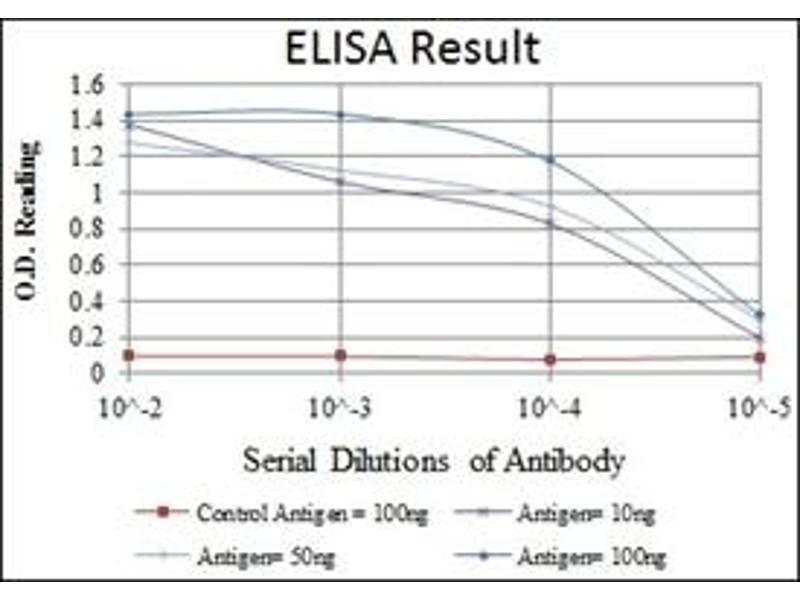 ELISA image for anti-Mitogen-Activated Protein Kinase Kinase 6 (MAP2K6) antibody (ABIN1108126)