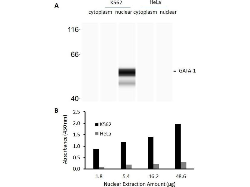 GATA Binding Protein 1 (Globin Transcription Factor 1) (GATA1) ELISA Kit