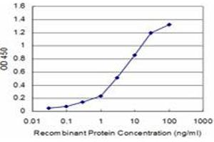 Image no. 1 for anti-D Site of Albumin Promoter (Albumin D-Box) Binding Protein (DBP) (AA 226-325) antibody (ABIN560571)
