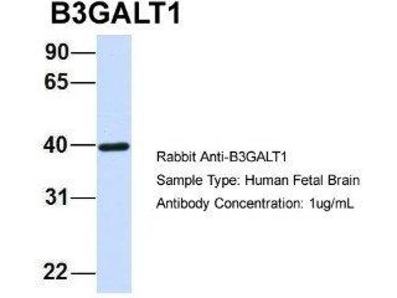 beta galactosidase and western blot Characterization and nuclear localization of the fiber protein encoded  immunoprecipitation and western blot analysis confirmed that  beta-galactosidase.