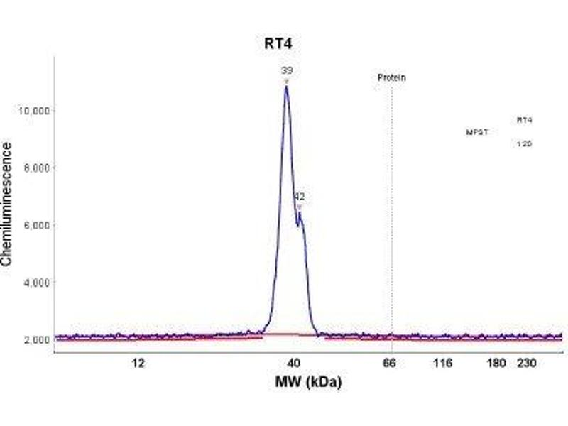 Simple Western (SimWes) image for anti-Mercaptopyruvate Sulfurtransferase (MPST) antibody (ABIN4335380)