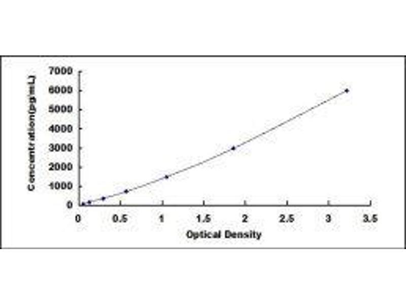 Insulin-Like Growth Factor Binding Protein 2, 36kDa (IGFBP2) ELISA Kit