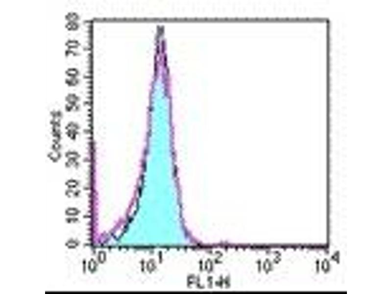 image for anti-Tumor Necrosis Factor Receptor Superfamily, Member 12A (TNFRSF12A) antibody (ABIN473944)