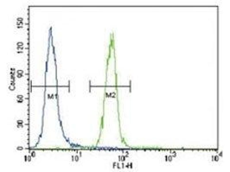 Flow Cytometry (FACS) image for anti-FYN antibody (FYN Oncogene Related To SRC, FGR, YES) (AA 13-43) (ABIN3031009)