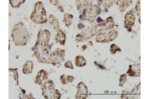 Image no. 2 for anti-Mediator Complex Subunit 31 (MED31) (AA 1-131) antibody (ABIN565511)