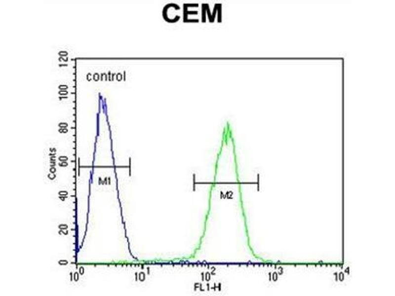 Flow Cytometry (FACS) image for anti-SFR1 antibody (SWI5-Dependent Recombination Repair 1) (N-Term) (ABIN950712)
