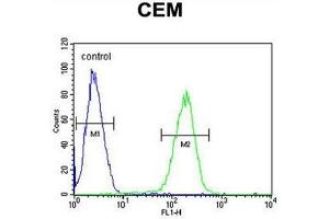 Flow Cytometry (FACS) image for anti-SWI5-Dependent Recombination Repair 1 (SFR1) (AA 1-30), (N-Term) antibody (ABIN950712)