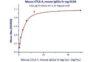 Image no. 2 for Cytotoxic T-Lymphocyte-Associated Protein 4 (CTLA4) (AA 36-162) (Active) protein (Fc Tag) (ABIN4949168)
