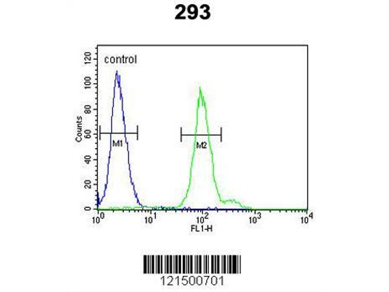 Flow Cytometry (FACS) image for anti-Complement Factor B (CFB) (AA 469-494), (Center) antibody (ABIN652979)