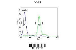 Flow Cytometry (FACS) image for anti-Complement Factor B antibody (CFB) (AA 469-494) (ABIN652979)