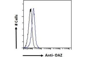 Image no. 2 for anti-Zinc Finger Protein 423 (104125) (N-Term) antibody (ABIN308409)