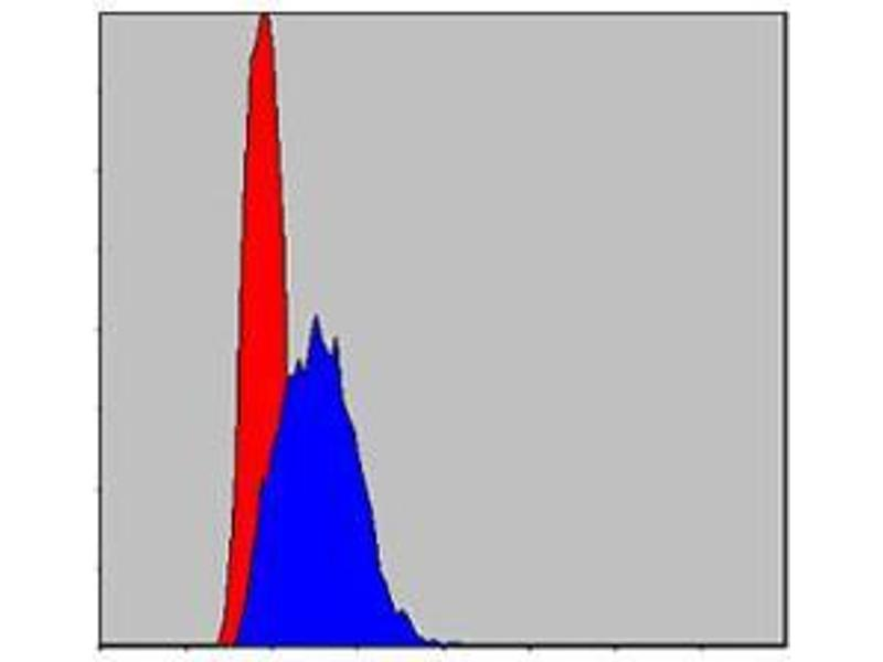 Flow Cytometry (FACS) image for anti-Jun Proto-Oncogene (JUN) antibody (ABIN4880344)