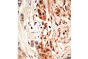 Image no. 2 for anti-Apolipoprotein B mRNA Editing Enzyme, Catalytic Polypeptide-Like 3A (APOBEC3A) (N-Term) antibody (ABIN356863)