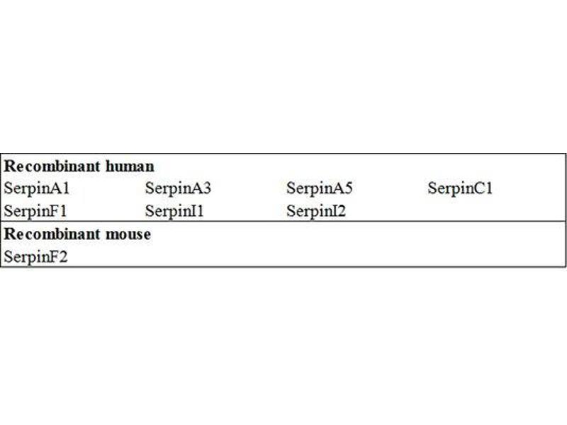 Serpin Peptidase Inhibitor, Clade G (C1 Inhibitor), Member 1 (SERPING1) ELISA Kit (2)