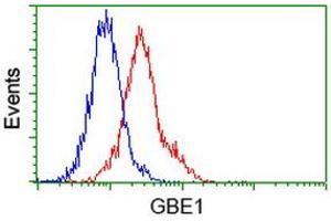 Image no. 6 for anti-Glucan (1,4-alpha-), Branching Enzyme 1 (GBE1) antibody (ABIN1498396)