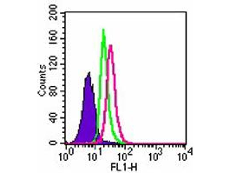 image for anti-Toll-Like Receptor 3 (TLR3) antibody (ABIN531989)