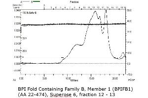 Image no. 3 for BPI Fold Containing Family B, Member 1 (BPIFB1) (AA 22-474) protein (His tag) (ABIN3122859)