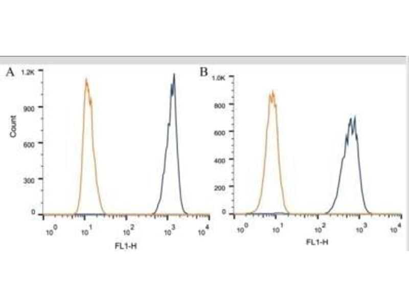 Flow Cytometry (FACS) image for anti-Apolipoprotein A-V (APOA5) antibody (ABIN152906)