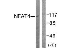 Western Blotting (WB) image for anti-Nuclear Factor of Activated T-Cells, Cytoplasmic, Calcineurin-Dependent 3 (NFATC3) (AA 131-180) antibody (ABIN1532368)