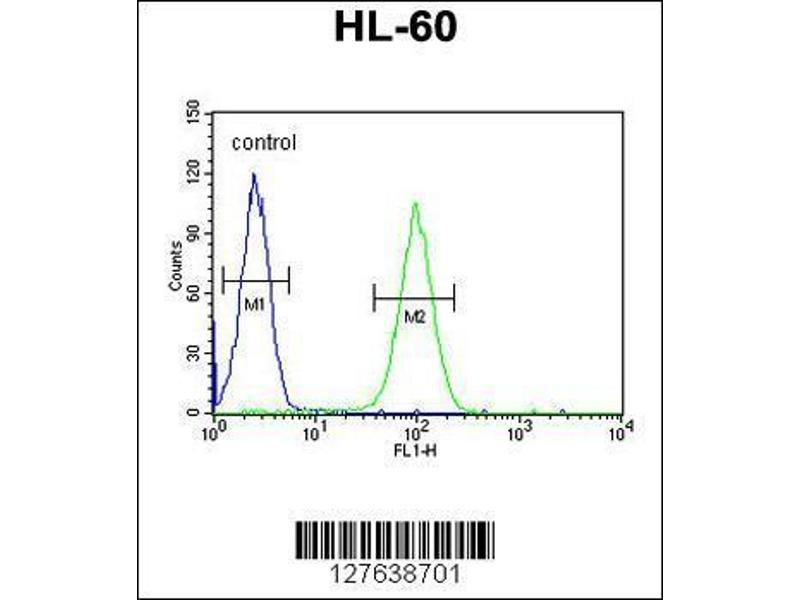 Flow Cytometry (FACS) image for anti-Leucyl/cystinyl Aminopeptidase (LNPEP) (AA 23-52), (N-Term) antibody (ABIN654230)