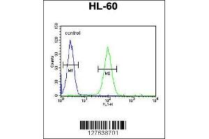 Flow Cytometry (FACS) image for anti-LNPEP antibody (Leucyl/cystinyl Aminopeptidase) (AA 23-52) (ABIN654230)