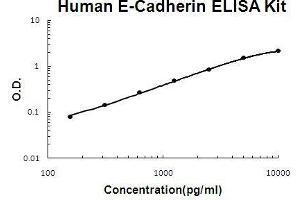 Image no. 1 for Cadherin 1, Type 1, E-Cadherin (Epithelial) (CDH1) ELISA Kit (ABIN411374)