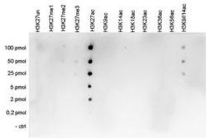 Image no. 7 for anti-Histone Cluster 1, H3a (HIST1H3A) (acLys27) antibody (ABIN5773852)