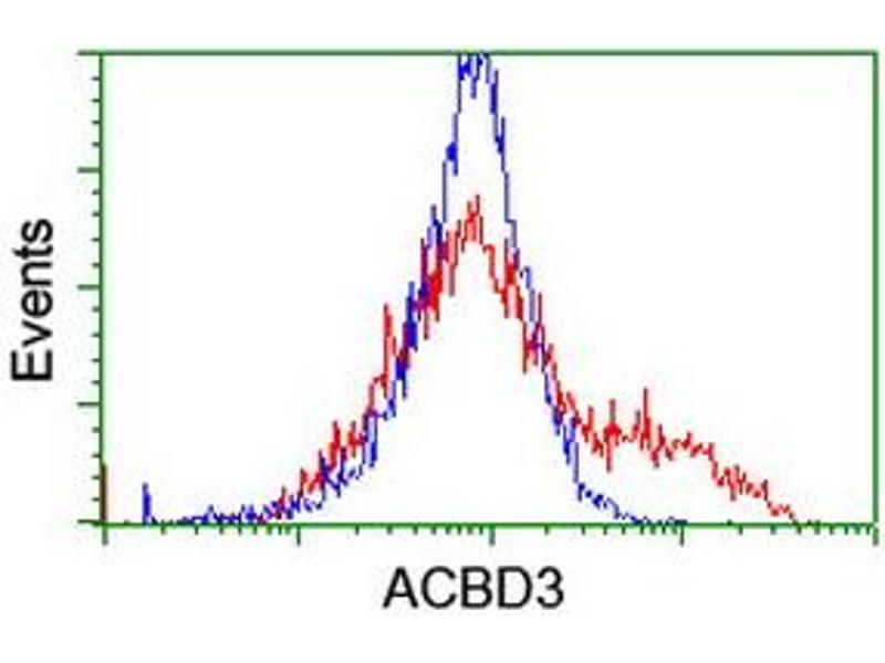 Image no. 1 for anti-Acyl-CoA Binding Domain Containing 3 (Acbd3) antibody (ABIN2715646)