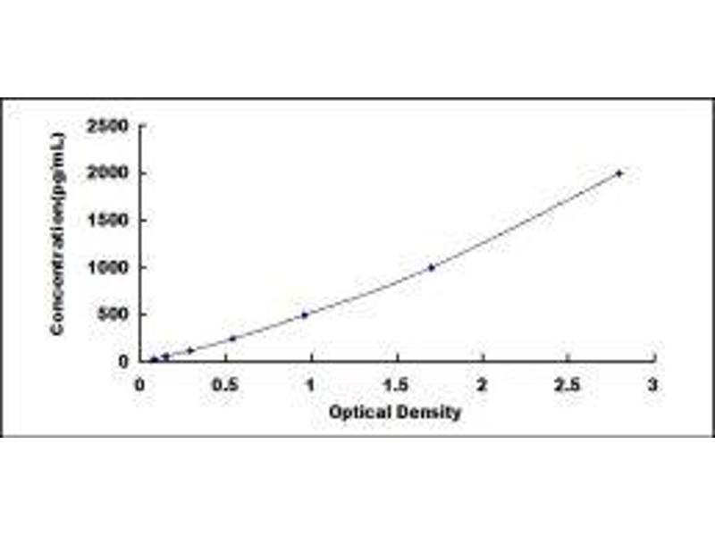 Heme Oxygenase (Decycling) 1 (HMOX1) ELISA Kit