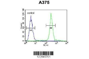 Flow Cytometry (FACS) image for anti-ARL8A antibody (ADP-Ribosylation Factor-Like 8A) (AA 116-142) (ABIN654121)