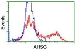 Image no. 4 for anti-alpha-2-HS-Glycoprotein (AHSG) antibody (ABIN1496502)