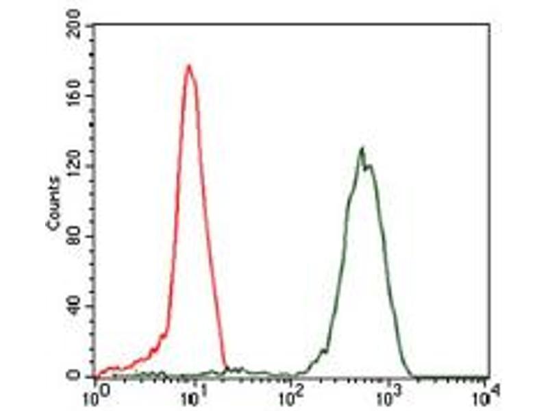 Image no. 5 for anti-Eukaryotic Translation Initiation Factor 4B (EIF4B) antibody (ABIN1497978)
