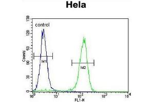Flow Cytometry (FACS) image for anti-Cyclin C antibody (CCNC) (N-Term) (ABIN951753)