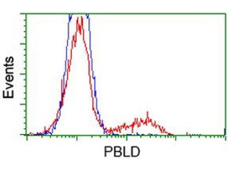 Image no. 1 for anti-Phenazine Biosynthesis-Like Protein Domain Containing 1 (PBLD1) antibody (ABIN2725563)