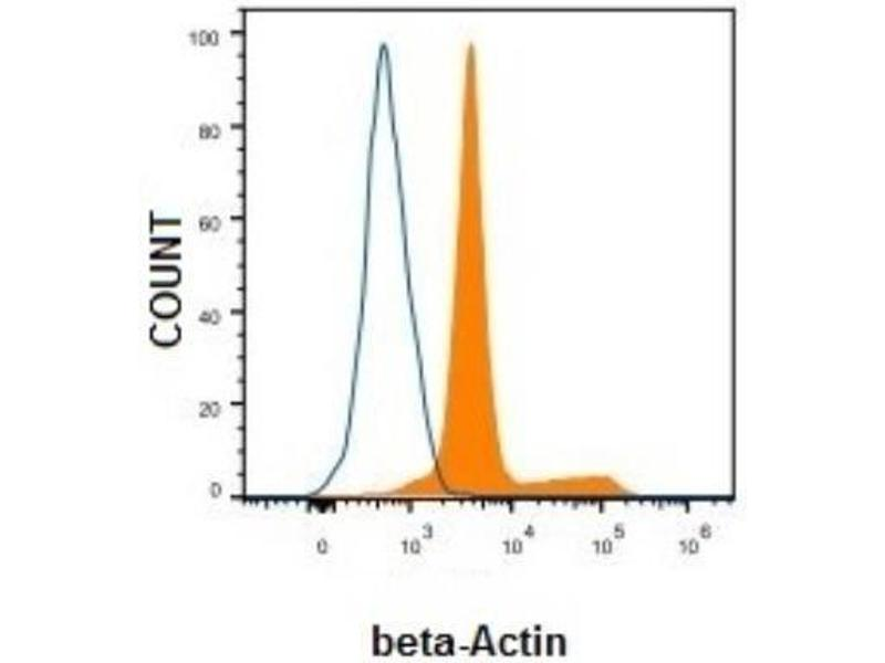 Flow Cytometry (FACS) image for anti-beta Actin antibody (Actin, beta) (N-Term) (ABIN153386)