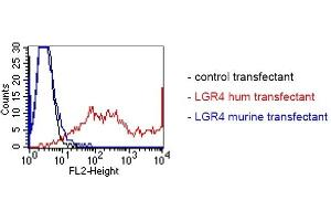 Image no. 2 for anti-Leucine-Rich Repeat Containing G Protein-Coupled Receptor 4 (LGR4) antibody (ABIN1720913)