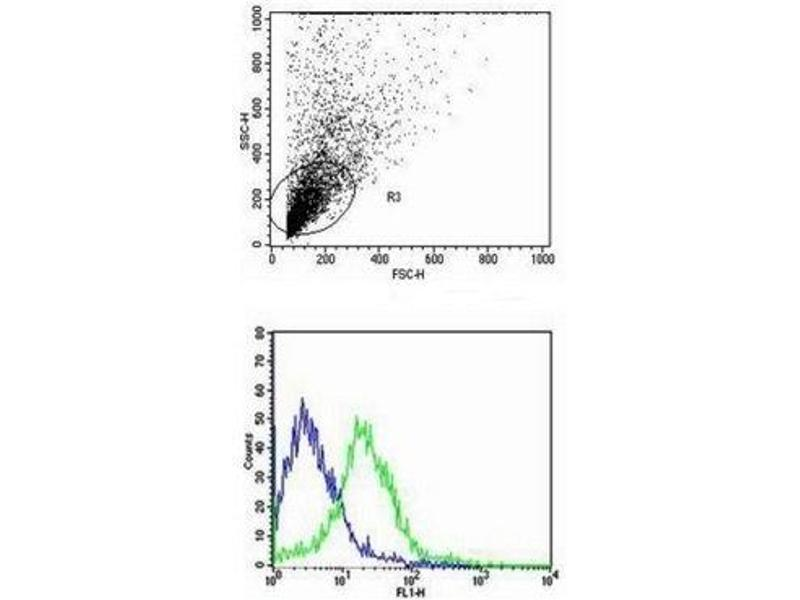 Flow Cytometry (FACS) image for anti-CD40 Ligand antibody (CD40LG) (AA 47-80) (ABIN674439)