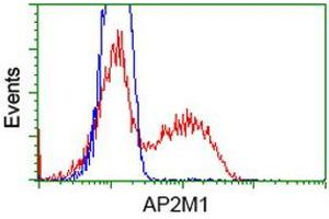 Image no. 1 for anti-Adaptor-Related Protein Complex 2, mu 1 Subunit (AP2M1) (AA 97-383) antibody (ABIN1491721)