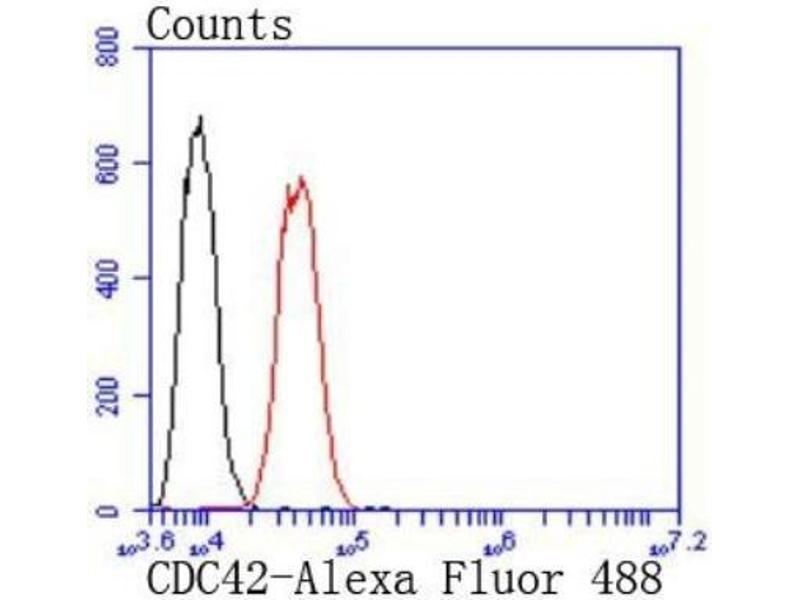 Flow Cytometry (FACS) image for anti-Cell Division Cycle 42 (GTP Binding Protein, 25kDa) (CDC42) (C-Term) antibody (ABIN5950889)