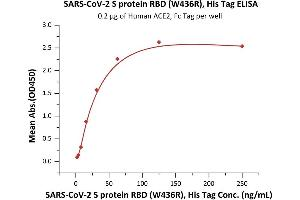 Image no. 3 for SARS-CoV-2 Spike S1 (RBD), (W436R) protein (His tag) (ABIN6952632)