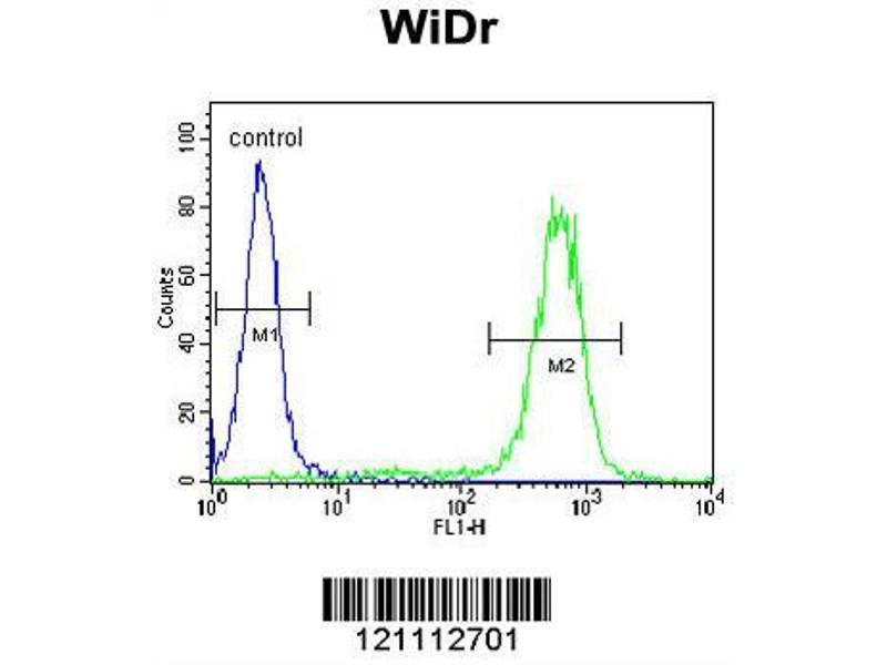 Flow Cytometry (FACS) image for anti-Calreticulin antibody (CALR) (AA 277-305) (ABIN390885)