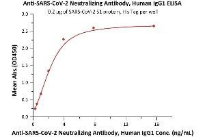 Image no. 3 for anti-SARS-CoV-2 Spike S1 (RBD) antibody (ABIN6952616)