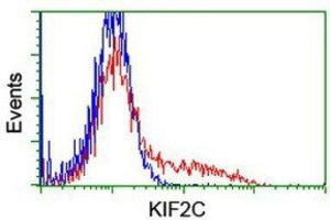 Flow Cytometry (FACS) image for anti-KIF2C antibody (Kinesin Family Member 2C) (ABIN4328842)