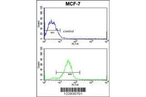 Flow Cytometry (FACS) image for anti-Adenylate Cyclase 7 (Adcy7) (AA 510-539), (Center) antibody (ABIN653337)